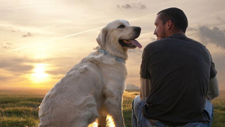 Kafshët shtëpiake ndihmojnë në trajtimin e depresionit