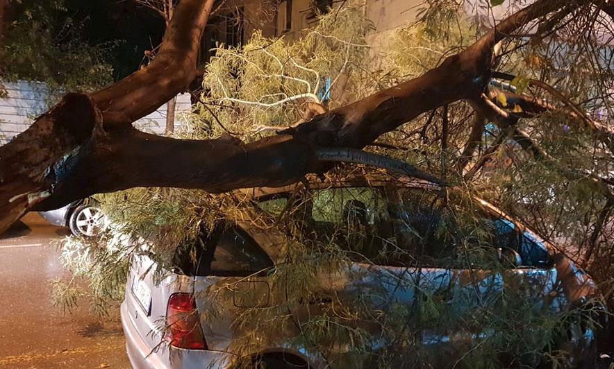 Stuhia në Tiranë, pema shkëputet e bie mbi një automjet të parkuar (Foto)