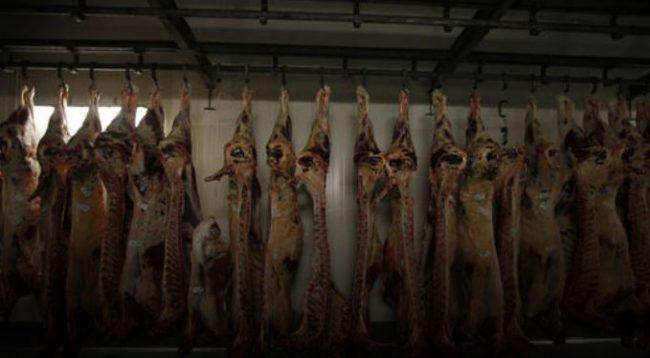 Belgjika ndalon sakrifikimin e kafshëve për Bajram