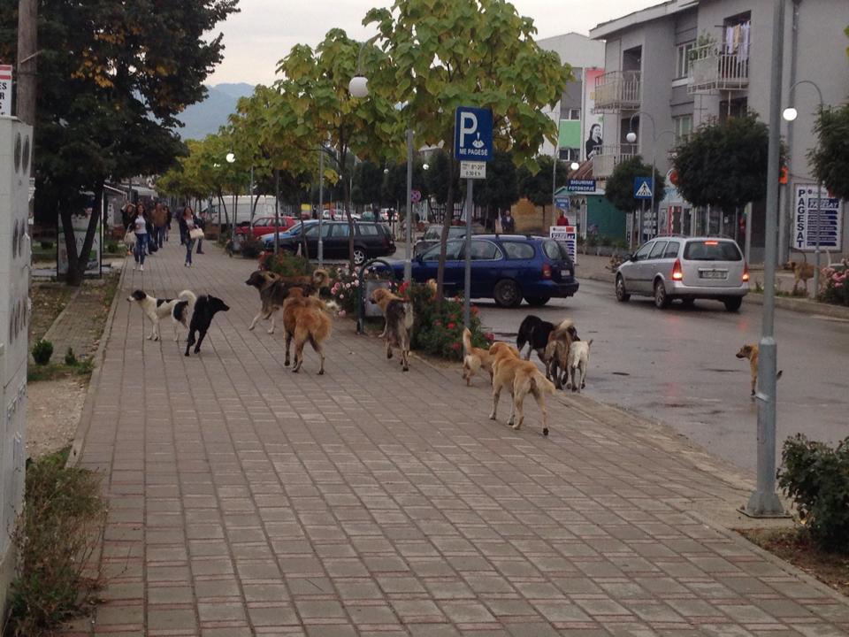 """Qytetarët në """"luftë"""" me qentë endacakë"""