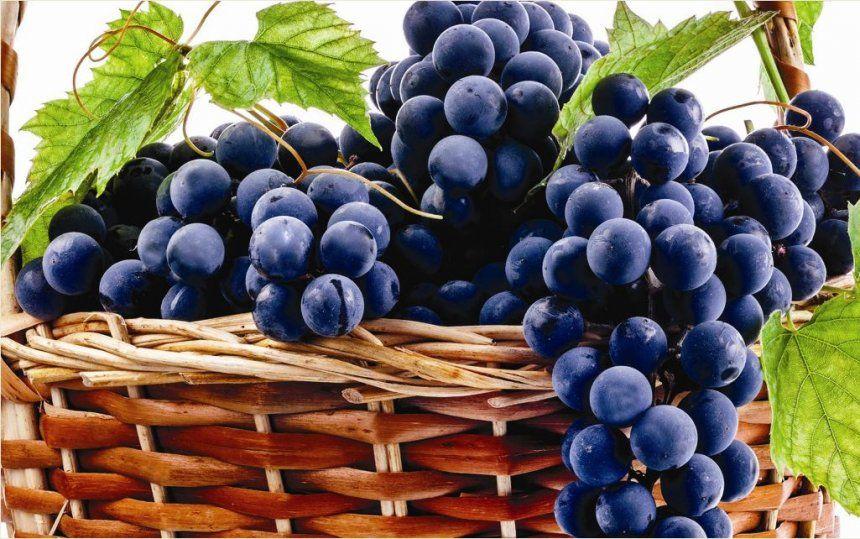 Rrushi zvogëlon nivelin e sheqerit në gjak