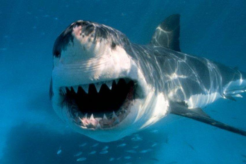 ADN-ja e peshkaqenit mund të përdoret për shërimin e kancerit