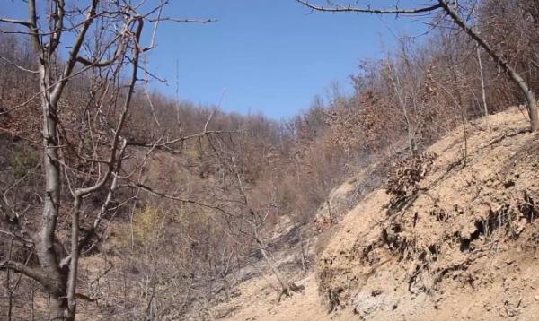 Burri 85-vjeçar humb jetën në Llaushë nga zjarri në tokën ku po punonte