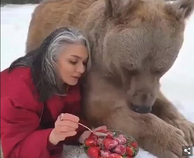 Shikuesit mbeten të tronditur derisa gruaja ushqen ariun me luleshtrydhe