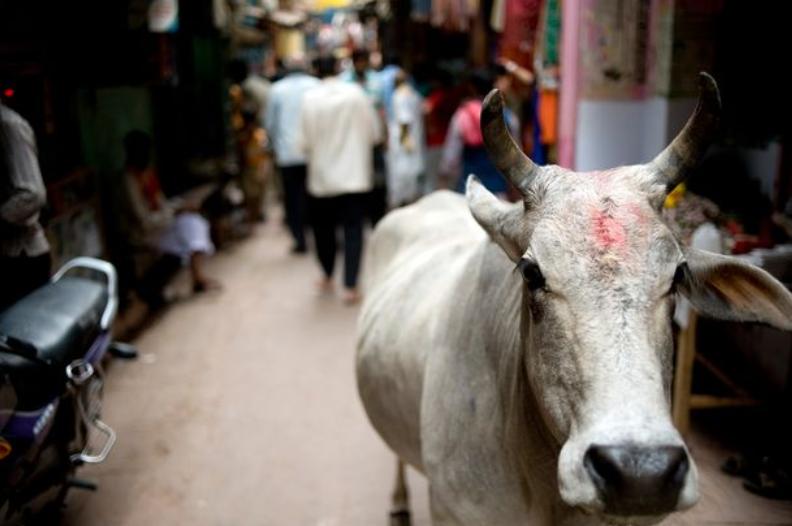 Burri hindu hëngri gabimisht mish viçi, kërkon nga supermarketi t'ia paguajë udhëtimin në Indi për të shlyer mëkatet
