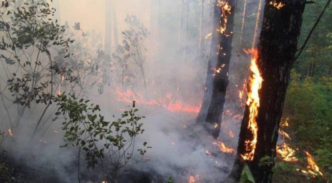 Mali i Batllavës përfshihet nga zjarri
