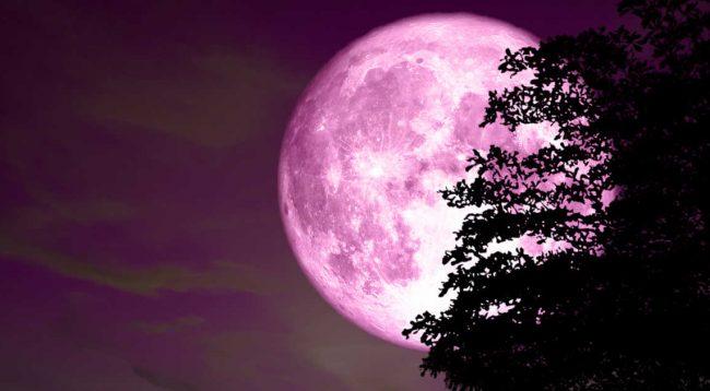 """Kësaj jave """"Hëna Rozë"""" do të ndriçojë mesnatën"""