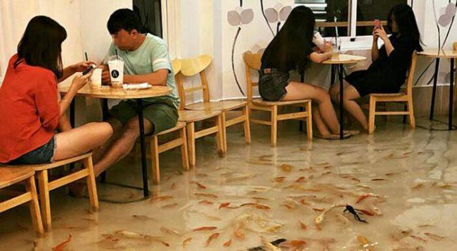 Bari i 'përmbytur', me peshq që notojnë në dysheme