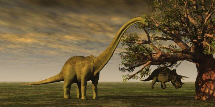Zbulohet varr masiv dinosaurësh