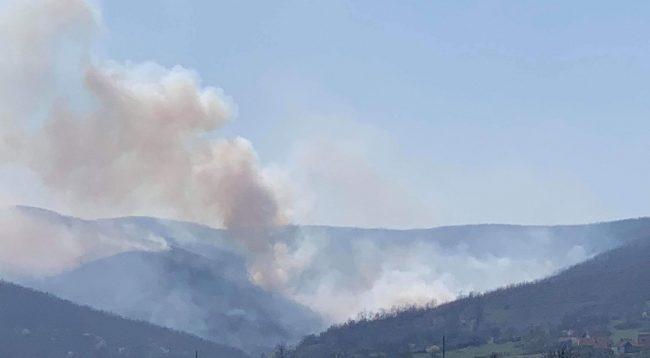 Qeveria harton një plan urgjent për parandalimin e zjarreve në pyje