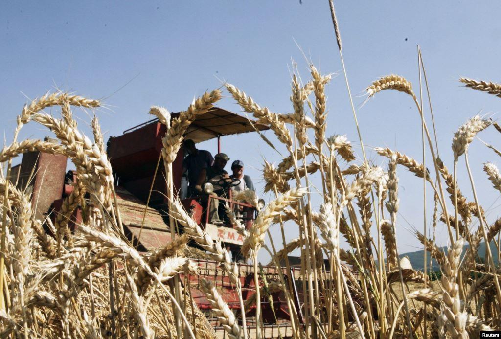 Prodhuesit vendorë përfitojnë nga zbatimi i taksës