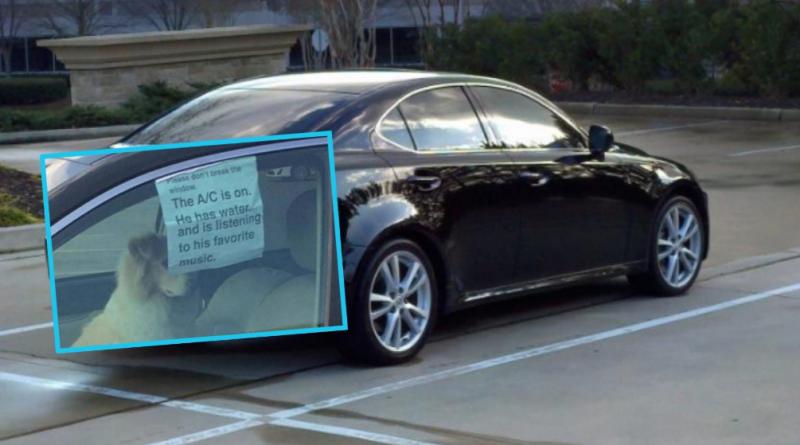 Qytetari e mbyllë qenin në veturë, por lë një mesazh për ata që do ta paragjykonin