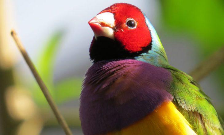 Vajza trajnon zogun për të sulmuar dhe nuk ka frikë të përdor fuqitë e saj