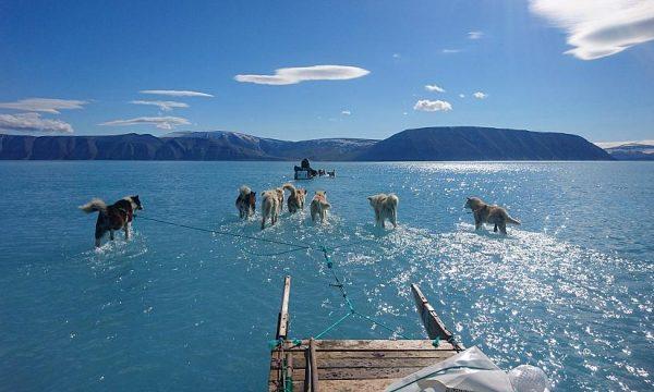 Fotografia virale e cila ilustron shkallën e shkrirjes së akullit në Grinlandë