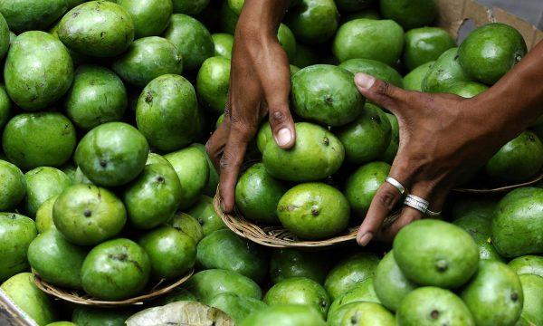 Filipinet e kanë një problem, nuk po kanë ku t'i lënë dy milionë kilogramë mango