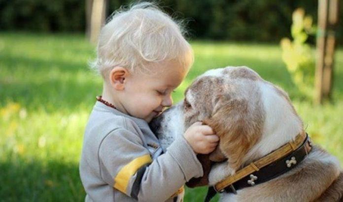 Përkëdhelja e një qeni ose maceje redukton stresin