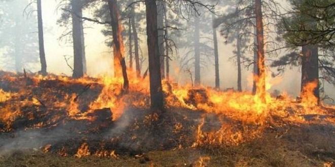 Zjarr i madh në Mallakastër, në rrezik sipërfaqe të mbjella me ullinj shekullorë