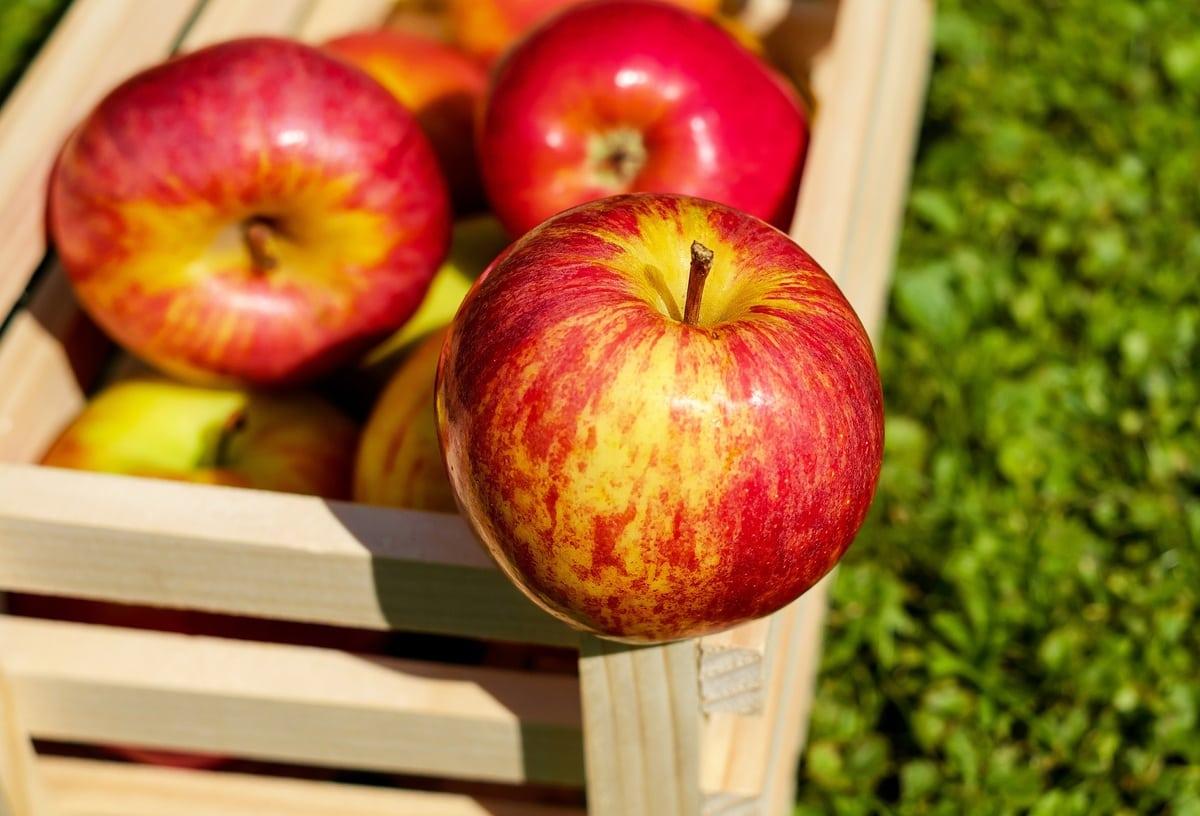 Jemi në stinën e mollës, këto janë përfitimet shëndetësore që i merrni nga ky frut