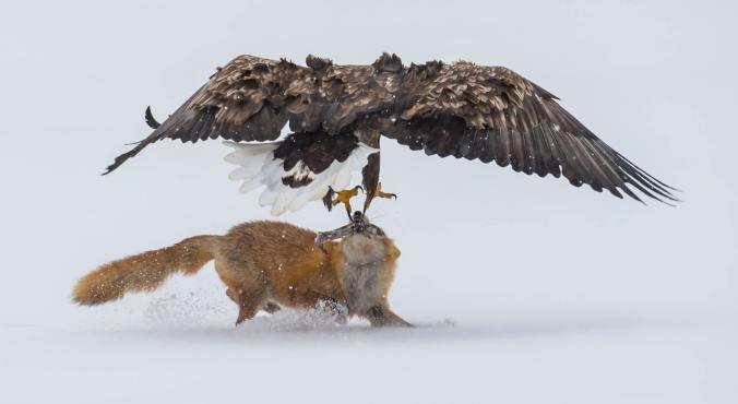 Kafshë të egra në aksion