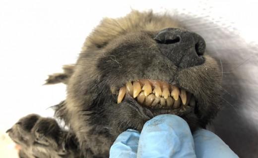 Sensacionale: Gjendet këlyshi 18.000-vjeçar