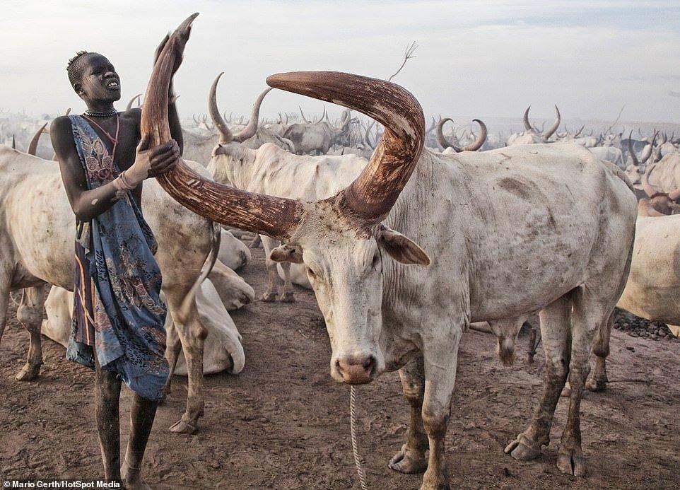 Në brendësi të fisit që bën dush me urinën e kafshëve (Foto)