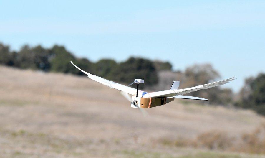 Pëllumbi robot, e ardhmja e fluturimeve