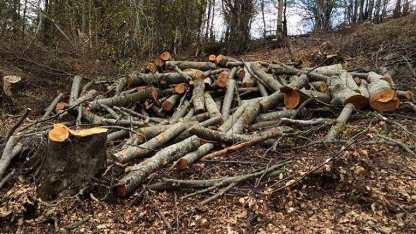 Pandemia zvogëlon eksportin e industrisë së drurit