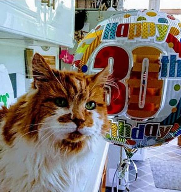 Ndahet nga jeta macja më jetëgjatë në botë