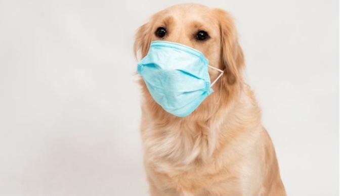Humb jetën qeni i parë që rezultoi pozitiv me Covid-19