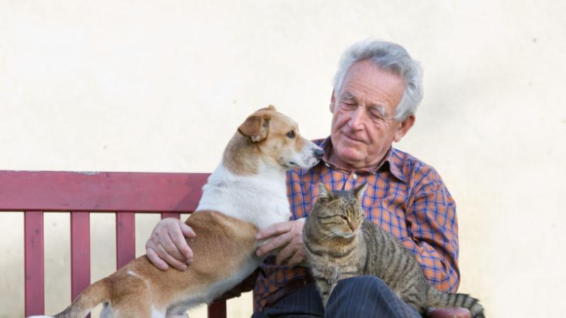 Njerëzit mund të transmetojnë koronavirusin te macet dhe qentë