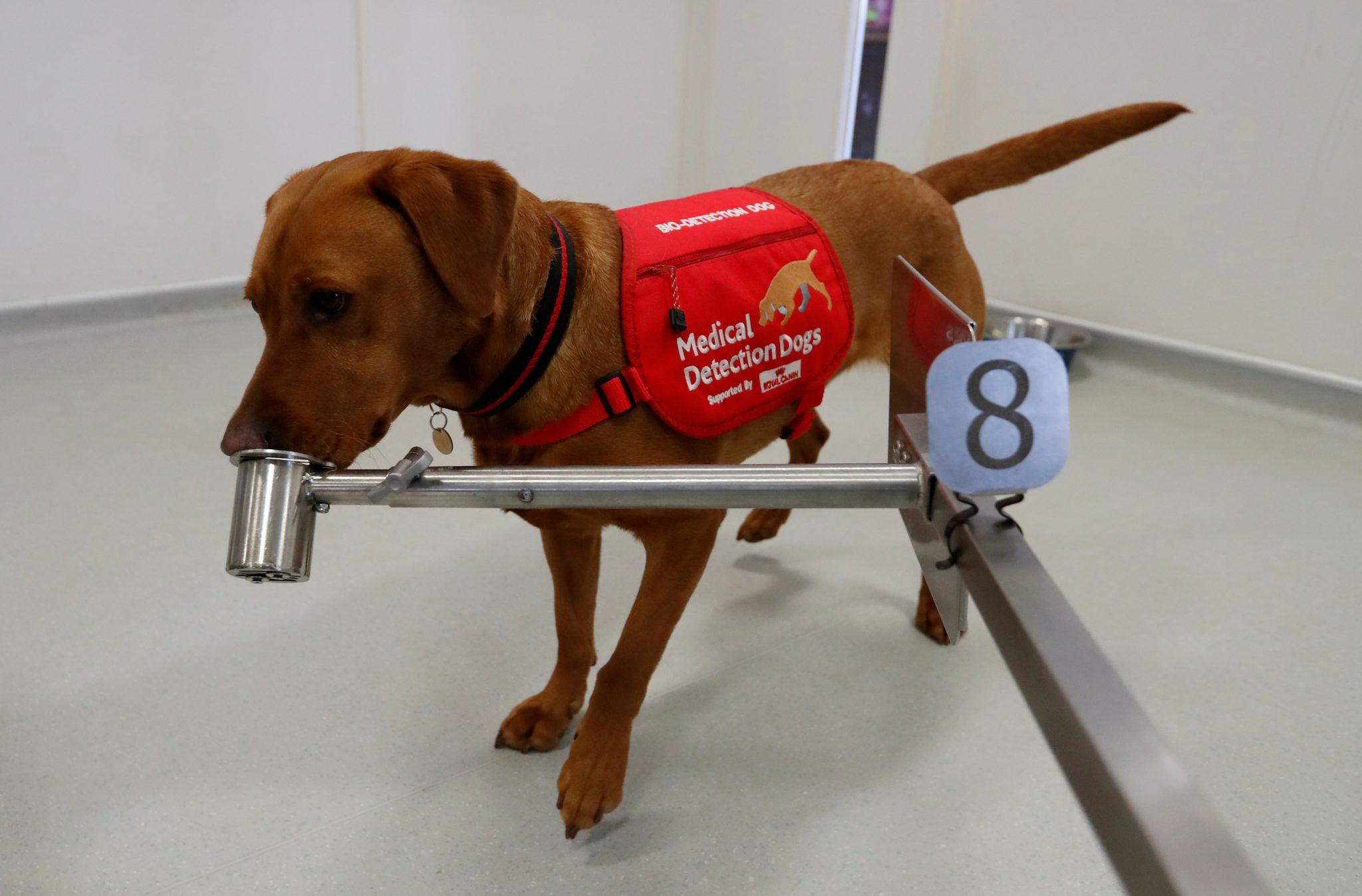 A munden qentë të nuhasin COVID-19?