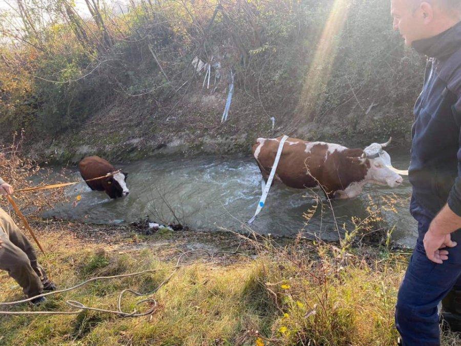 Në një fshat të Deçanit, dje ndodhi një ngjarje e pazakonshme