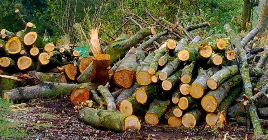 Pak metra dru të shtetit: Motivi bizar që çoi në vrasjen në Drenas