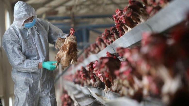 Gripi i shpezëve shpërndahet në krejt komunat e Kosovës, a ka rrezik edhe për njerëzit?