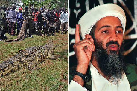 Krokodili i mbiquajtur 'Bin Laden' terrorizon fshatin ku ka ngrënë dhjetra banorë