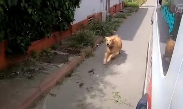Video me pamje ku qeni e shoqëron pronaren në spital