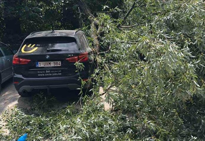 Destabilizohet moti në Kosovë, erërat e fuqishme rrëzojnë drunjtë në Pejë
