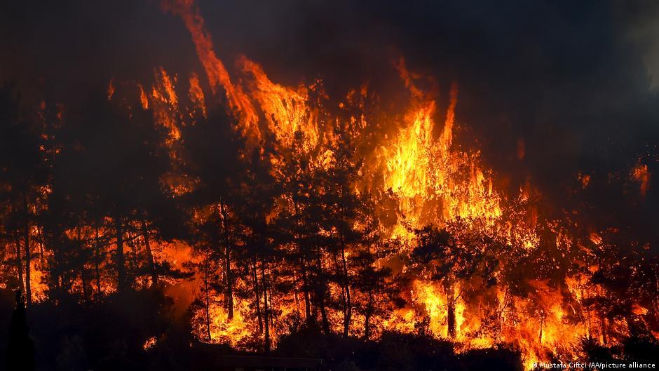 """Nga zjarret në Turqi lind një """"Mrekulli"""""""